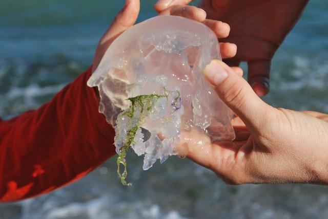 soulager une piqure de méduse, pas faicile mais on vous donne des bons conseils