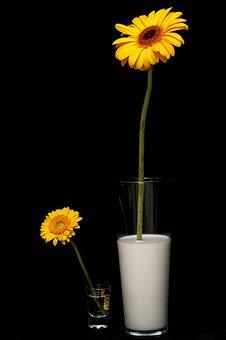 lait de croissance pour bébé